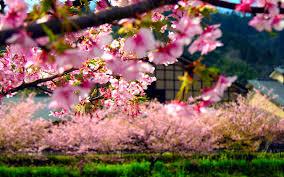 Spring - Meetime