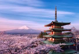 Cherry Blossom - Meetime