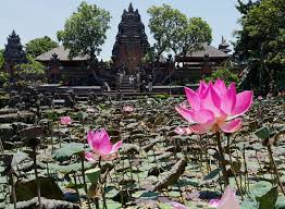 Pond Of Lotuses - Meetime